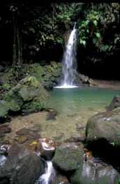 Dominica Emerald Pool - Caribbean Photos - copyright M. Timothy O'Keefe - www.GuidetoCaribbeanVacations.com